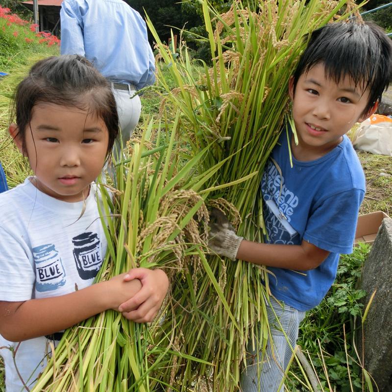棚田での自然、お米育て体験、味噌や納豆などの手作り体験