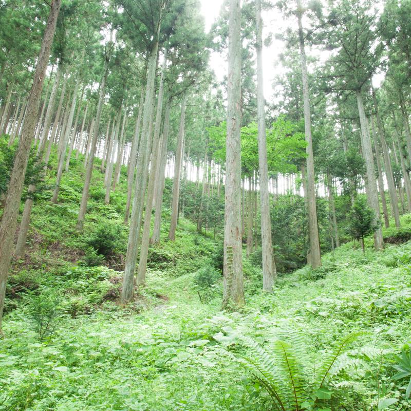 森林保全クレジット付 スマホスタンド「たちもく」