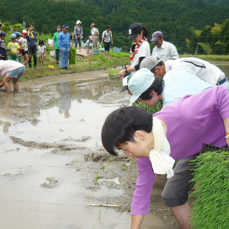 5435棚田での自然、お米育て体験、味噌や納豆などの手作り体験