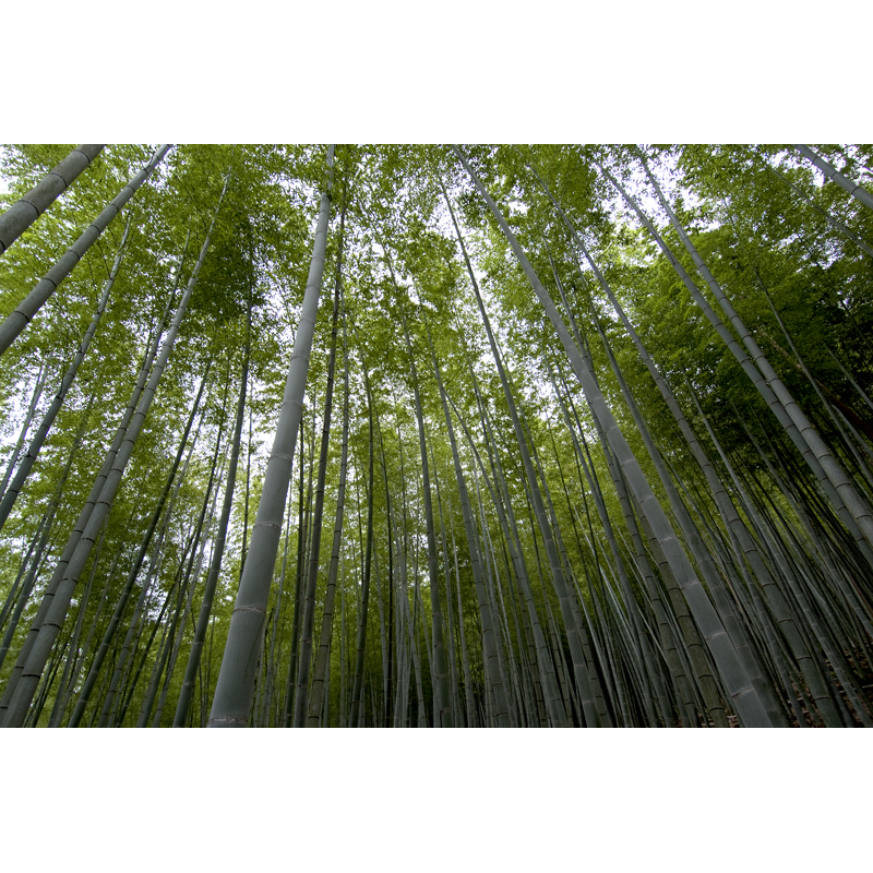 竹紙ノート