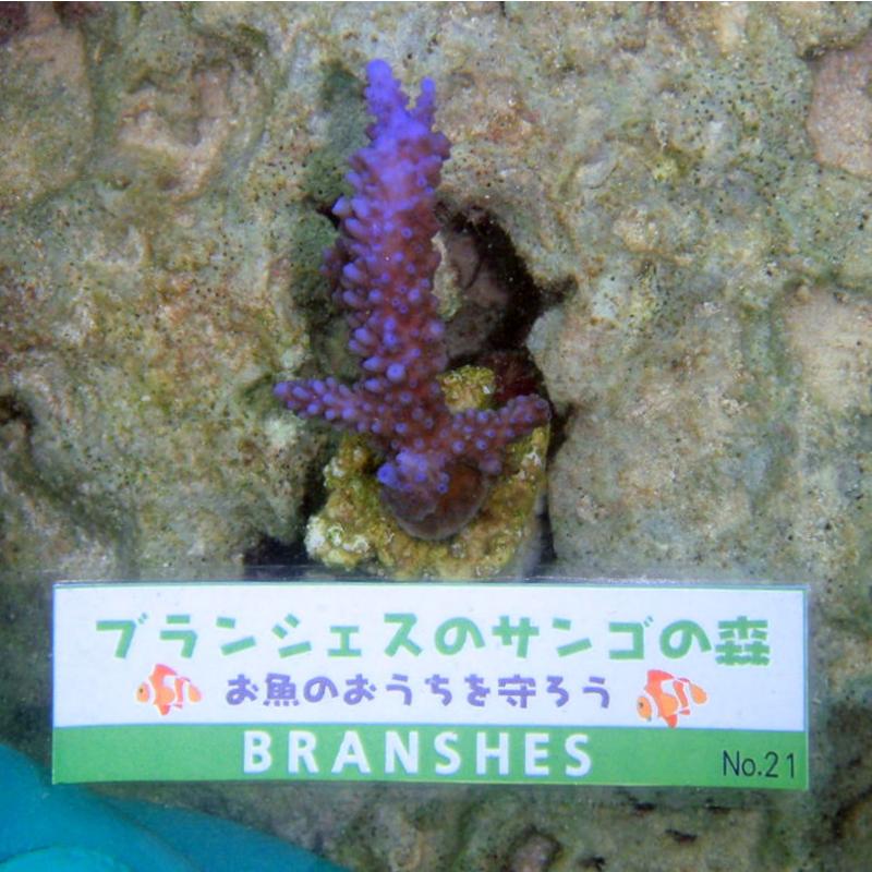 「サンゴの森」ECO今治ケナフハンドタオル