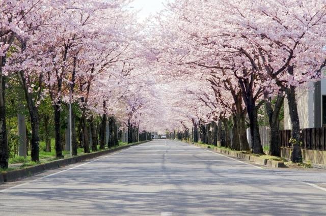 企業訪問インタビュー<br> 特定非営利活動法人ハッピーロードネット<br>「30年後の故郷に贈る ふくしま浜街道・桜プロジェクト」を訪ねて