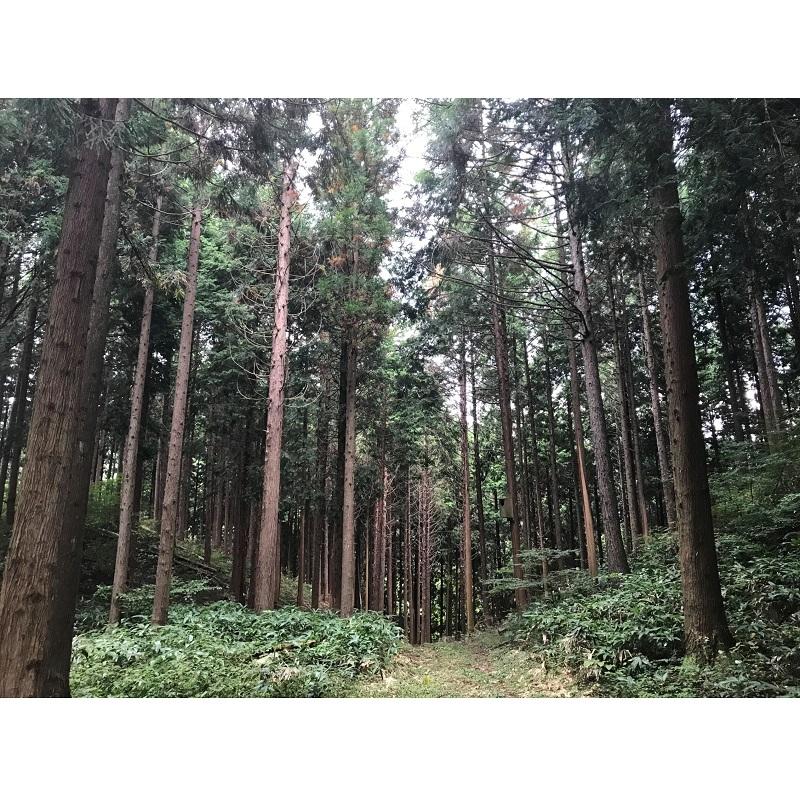 【年度テーマ】森のタンブラー