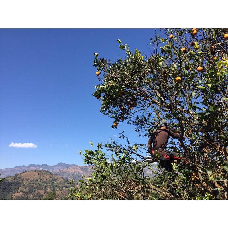 【自由テーマ】太陽とヒマラヤの恵み 香るチャイマサラ