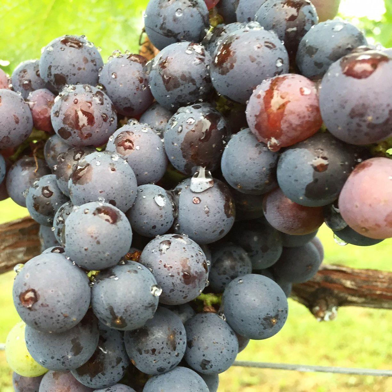 【年度テーマ】農福商工連携着地交流体験型ワイナリー「いわきワイナリー」