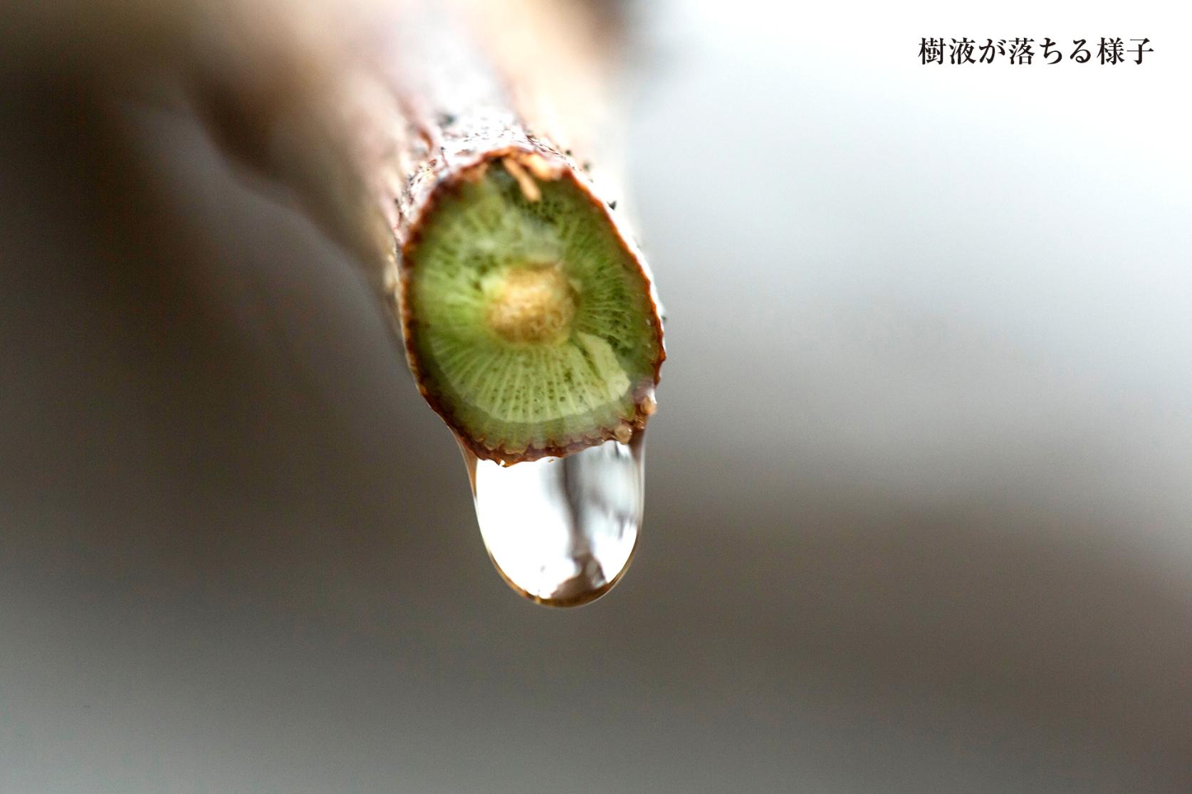 【自由テーマ】葡萄樹液ジェル (化粧品)